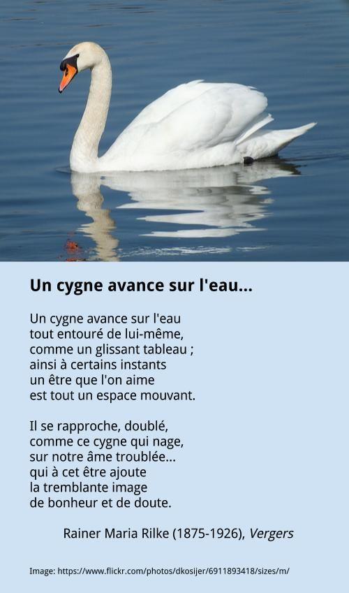 Rilke Un Cygne Avance Sur Leau Cygne Poésie Drôle Et