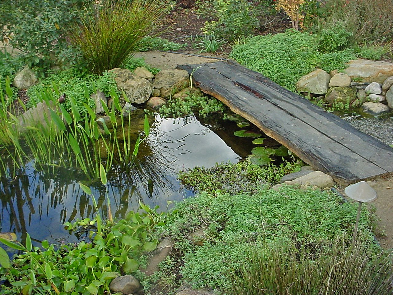 Natural pond garden by santa barbara landscape designer for Natural garden pond design