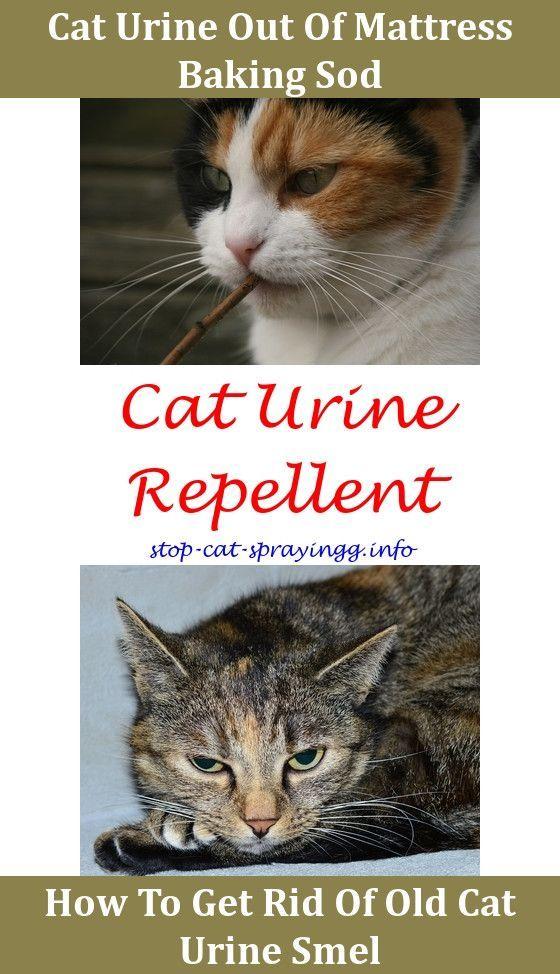 Diy Rug Cleaner Urine Smells