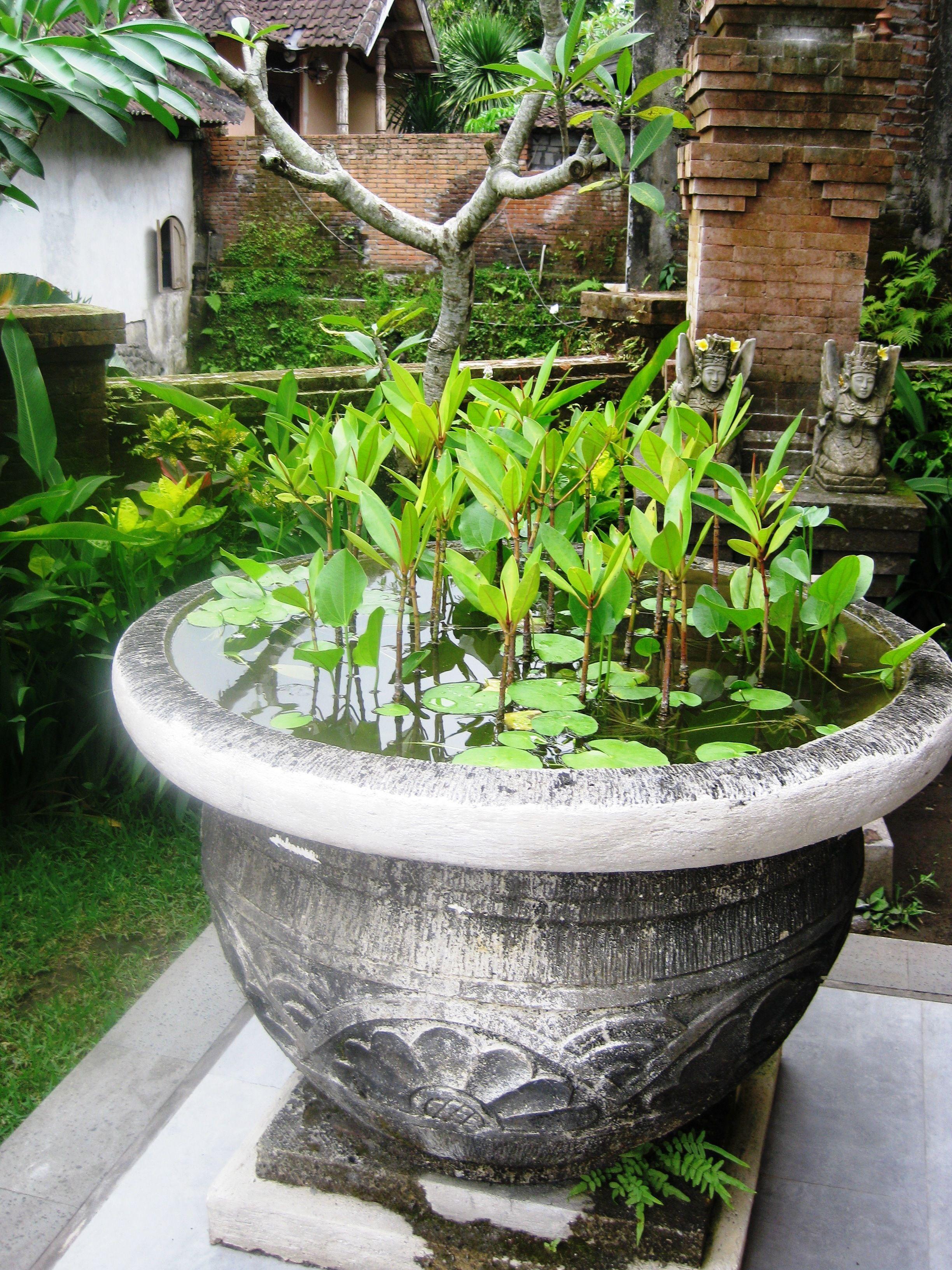 Lilies in the garden | Garden Ideas | Pinterest | Gardens, Tropical ...