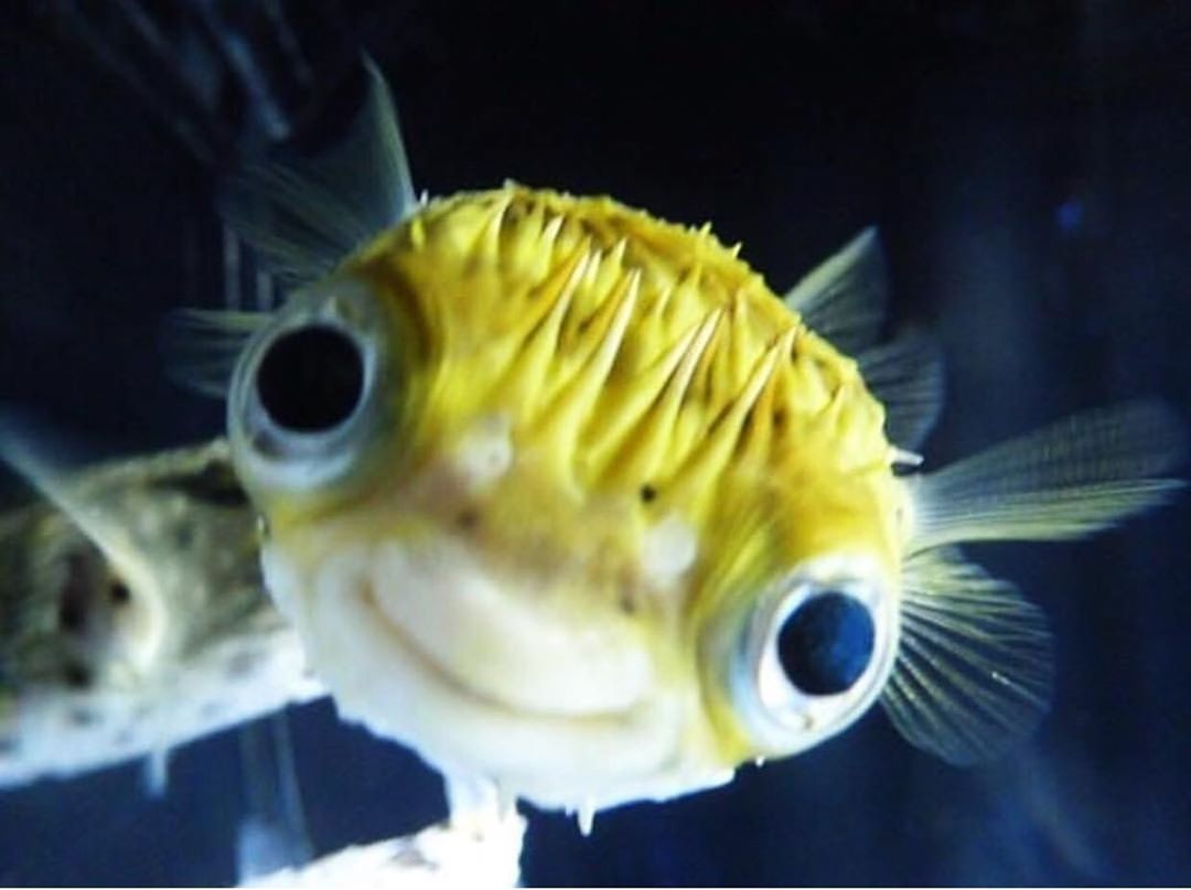Pin On Sea Creatures