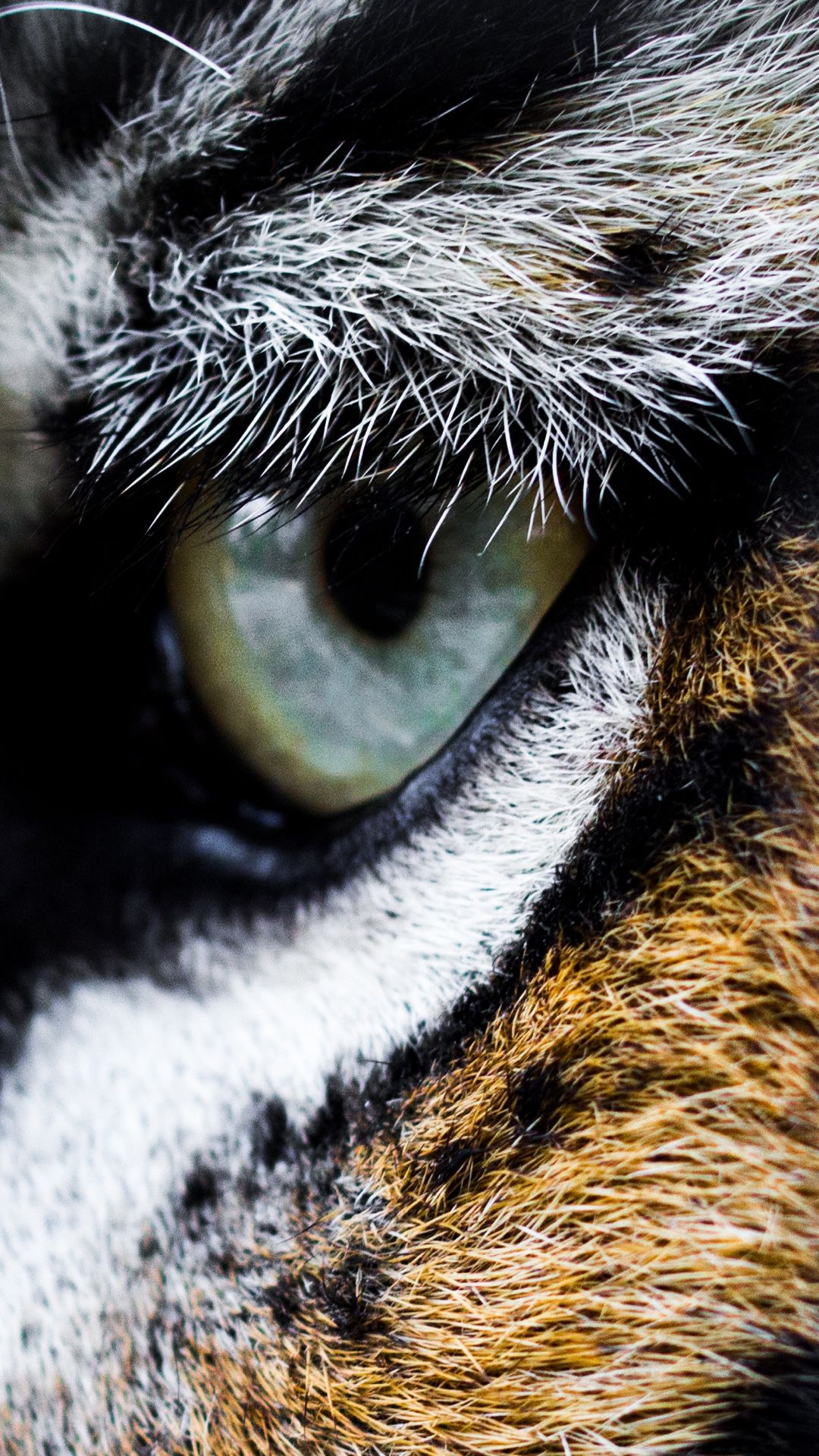 Tigers Eye Will Look Amazing On Your Iphone Animal Wallpaper Wild Animal Wallpaper Tiger Images
