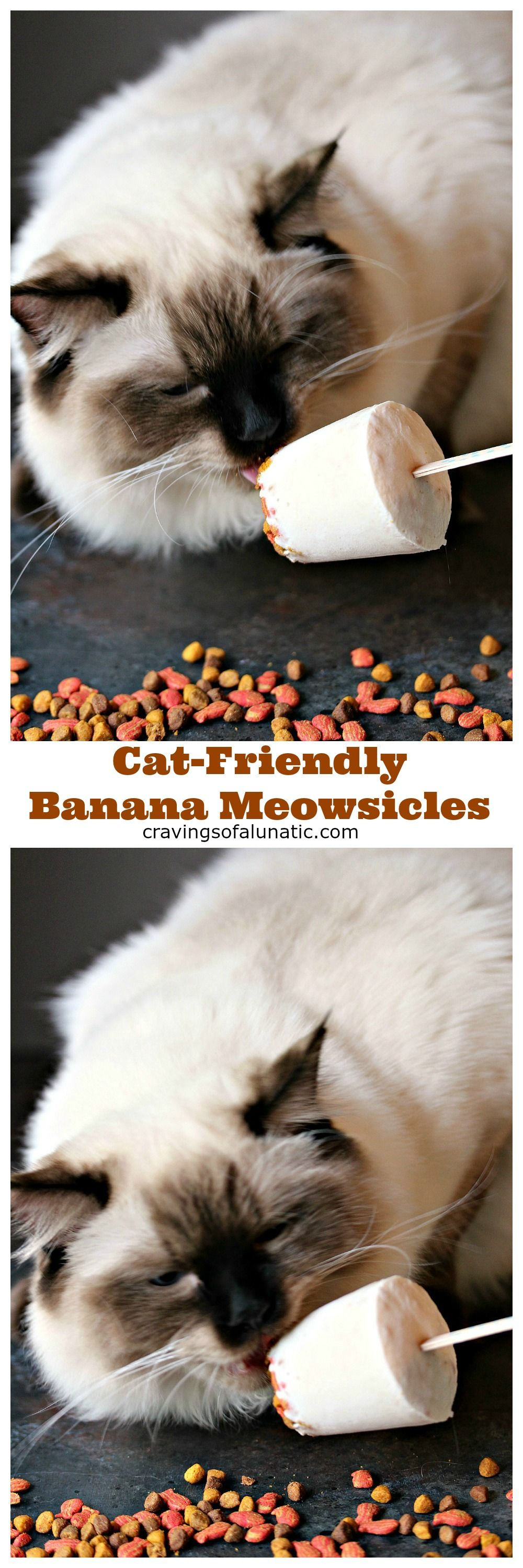 CatFriendly Banana Meowsicles from