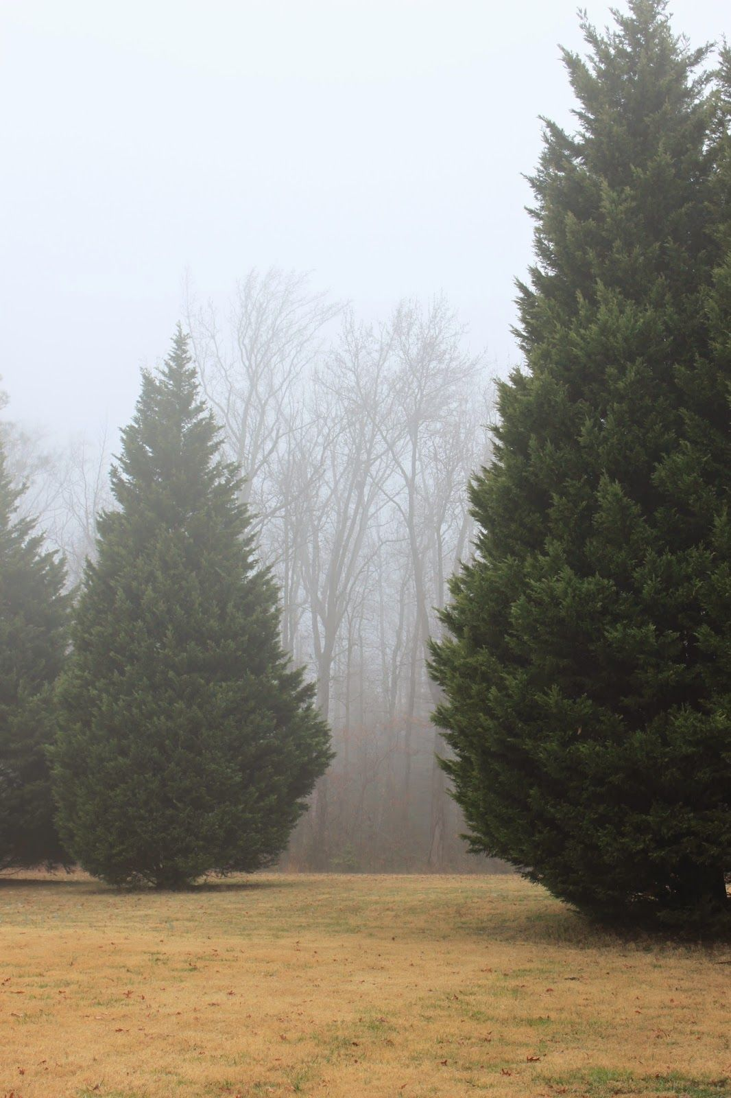 Blue's Views: Why we need evergreens