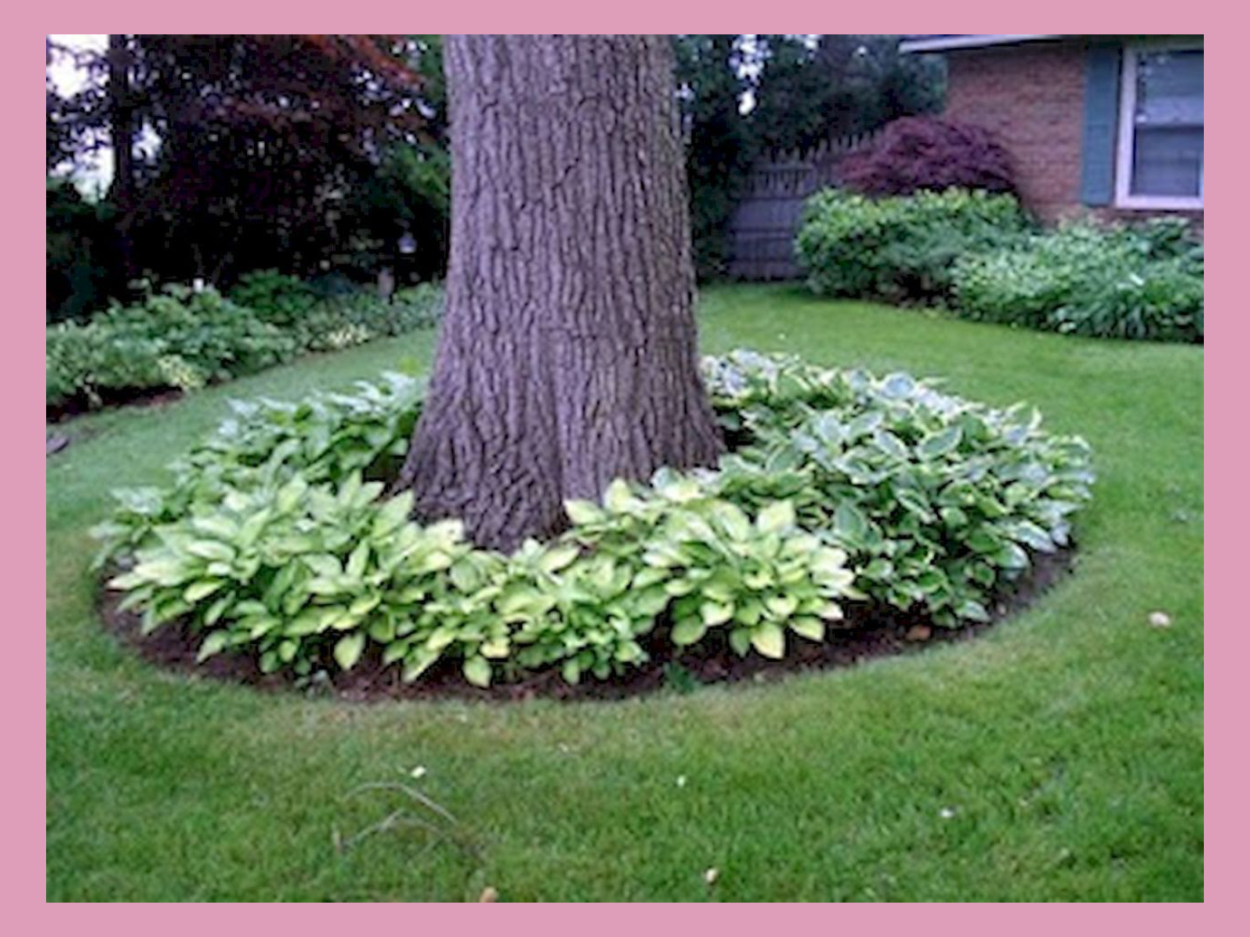 Pinterest In 2020 Landscaping Around Trees Landscaping Around House Backyard Trees
