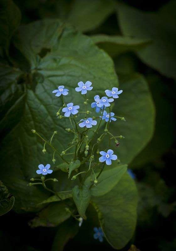 La Historia de los diseños de las #holos...empezó con una dulce flor......www.holoplace.net/info