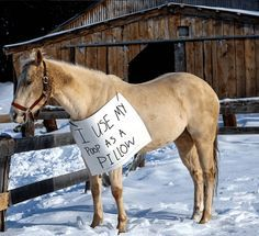 15 Times Horses Were Publicly Shamed By Their Owners
