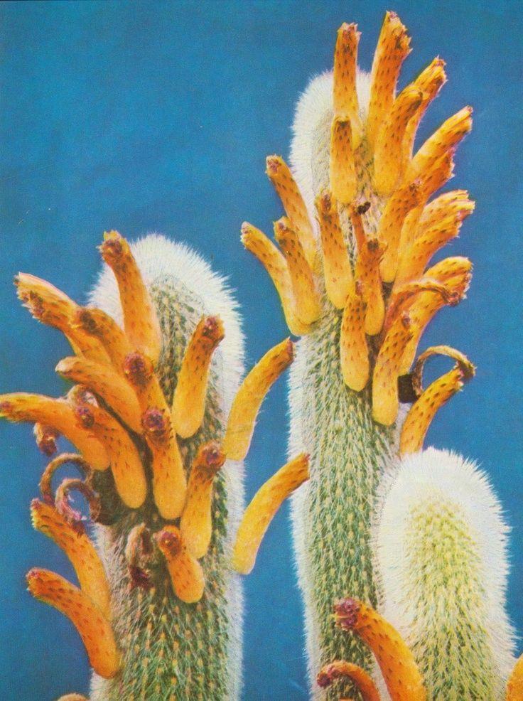 Desert in bloom. Xk #kellywearstler #myvibemylife #succulents