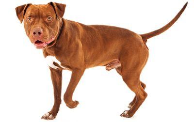 Pin On كلاب Dogs