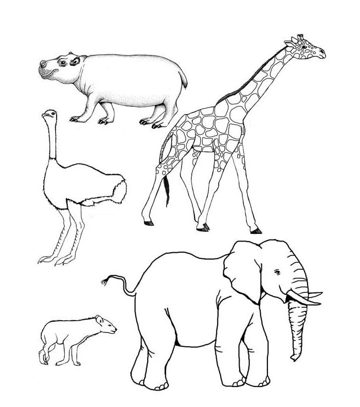 Image result for african animal drawing templates | Nurturing ...