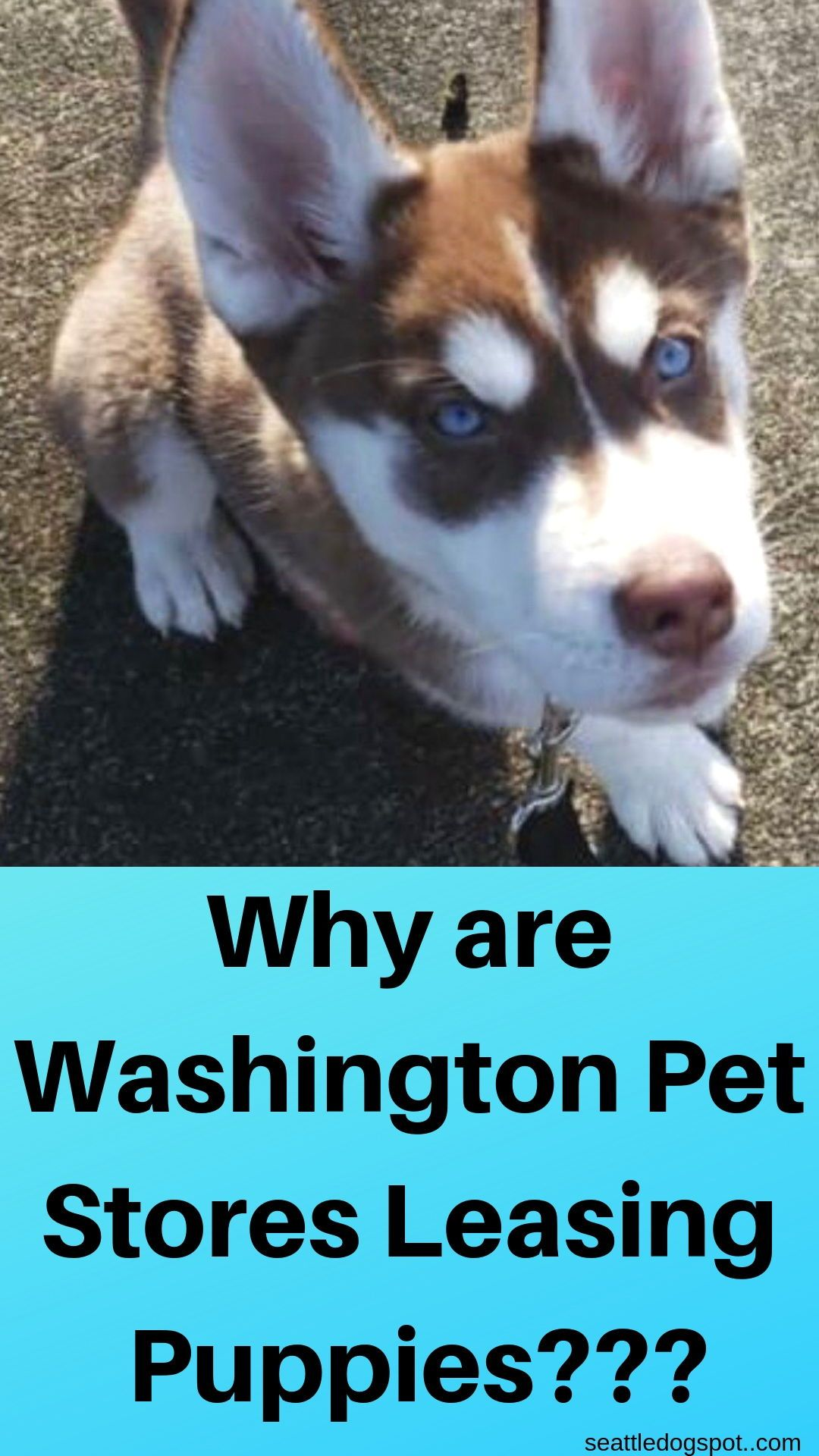 Washington Pet Stores Are Leasing Puppies Pet store