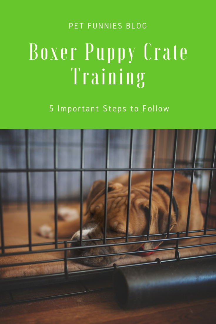 Wondering where to start in Boxer puppy crate training