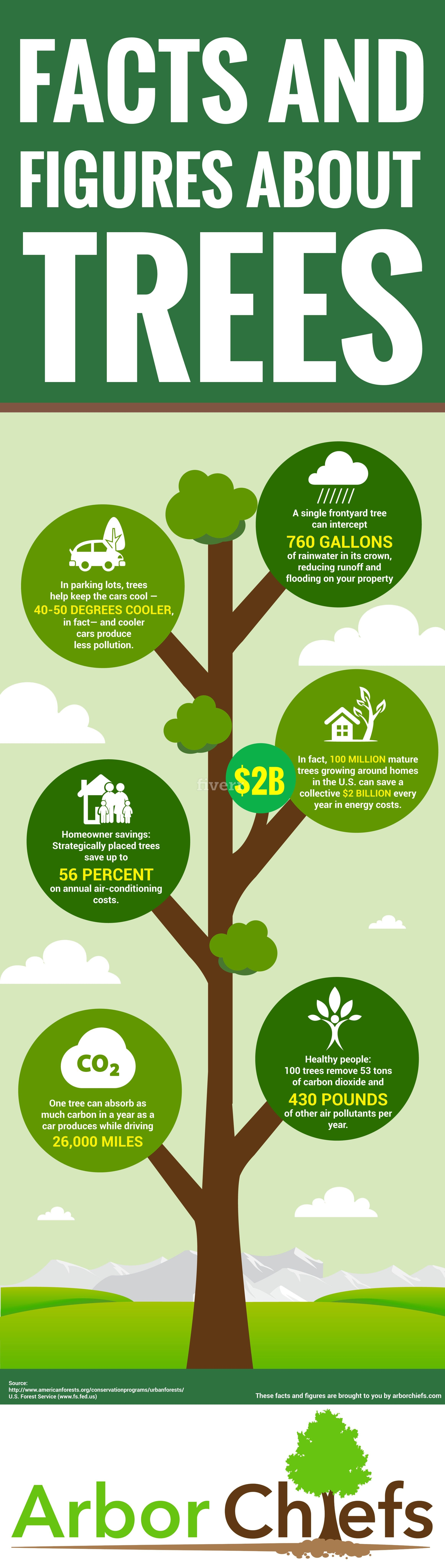 Amazing Facts and Figures About Trees Infographic Facts