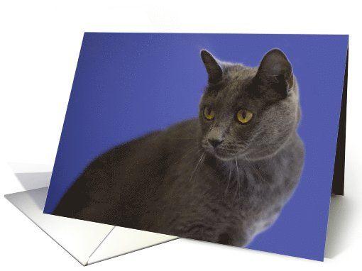 Russian Blue Cat Blank Note card (973705) by Janice Matson