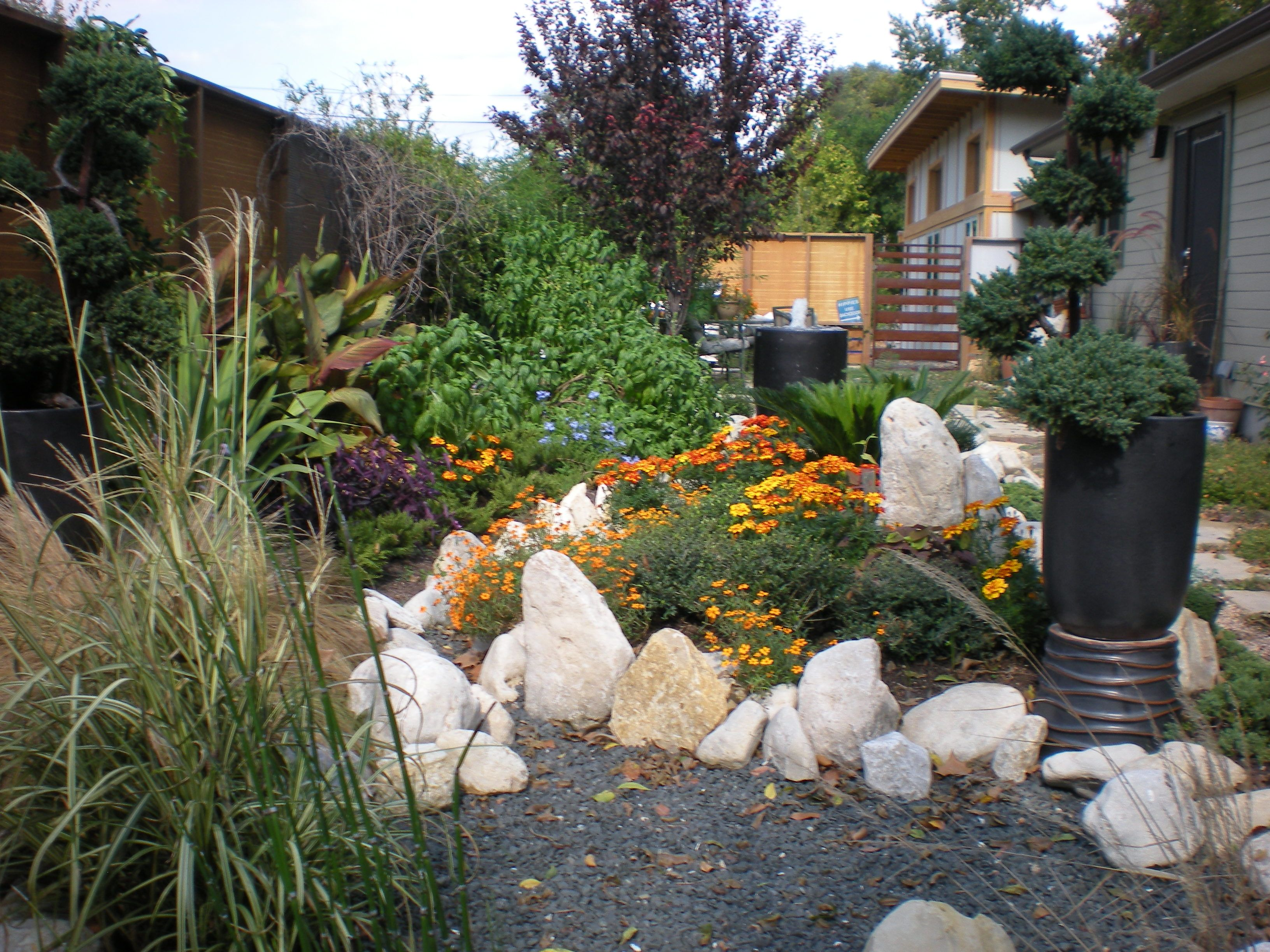 central texas xeriscaping with bill rose from blissful gardens