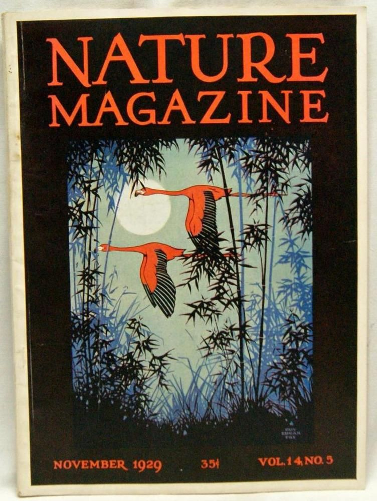 Nature Magazine November 1929 Vintage Wildlife Animals Plants Outdoors Wildlife Animals Nature Art Nature