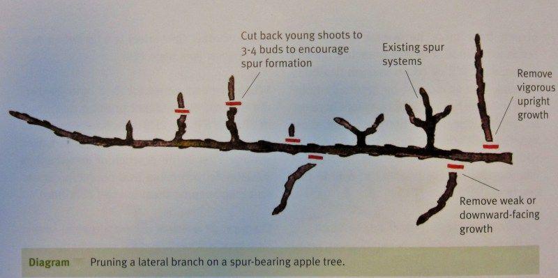 Fruit Trees Winter Pruning Care Workshop Fruit Trees Tree Pruning Pruning Fruit Trees