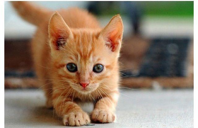 Cutie pie Süßeste haustiere, Süße katzen, Baby katzen