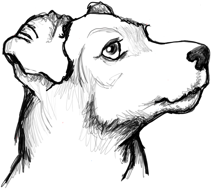 How To Draw A Terrier S Face Dog S Face With Easy Steps How To Draw Step By Step Drawing Tutorials Dog Drawing Simple Dog Face Drawing Animal Sketches Easy