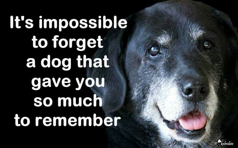 Thank You Icky And Yucky Debbie Pinterest Dogs Dog Quotes