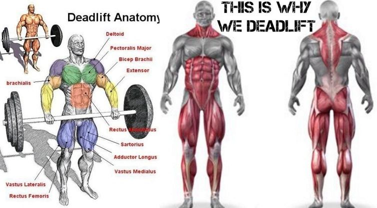 Image result for benefit of deadlift image