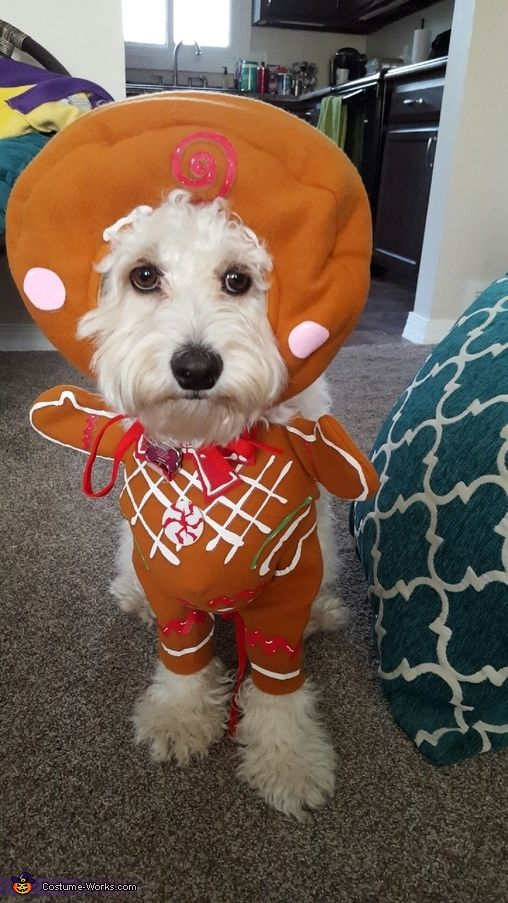 Christmas Gingerbread Goldendoodle Pup