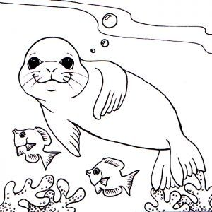 Monk Seal Colouring Pages For Kids Preschool And Kindergarten