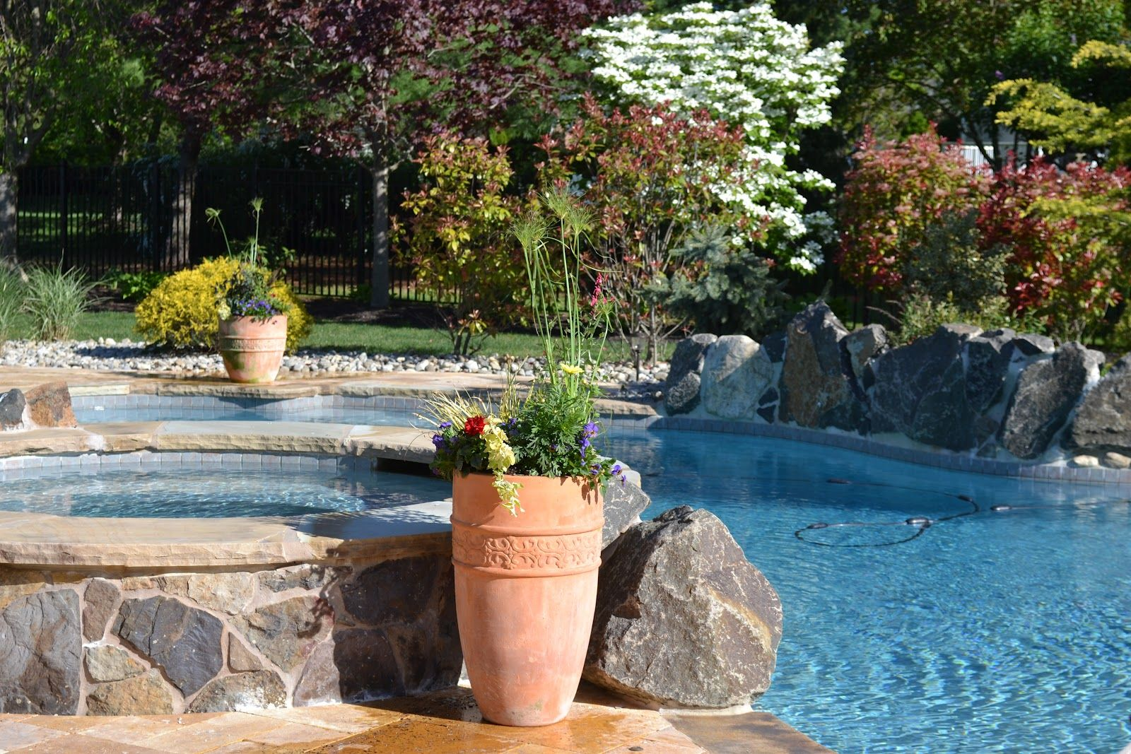 Flower plants around pool google search pool for Gardens around pools