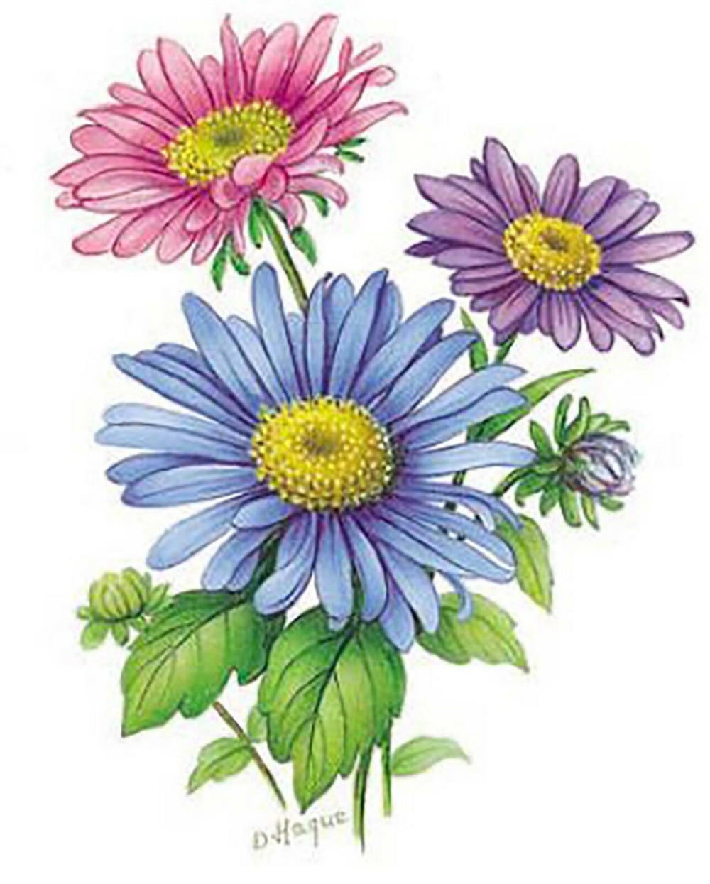Details about Flower of the Month September Asters Select