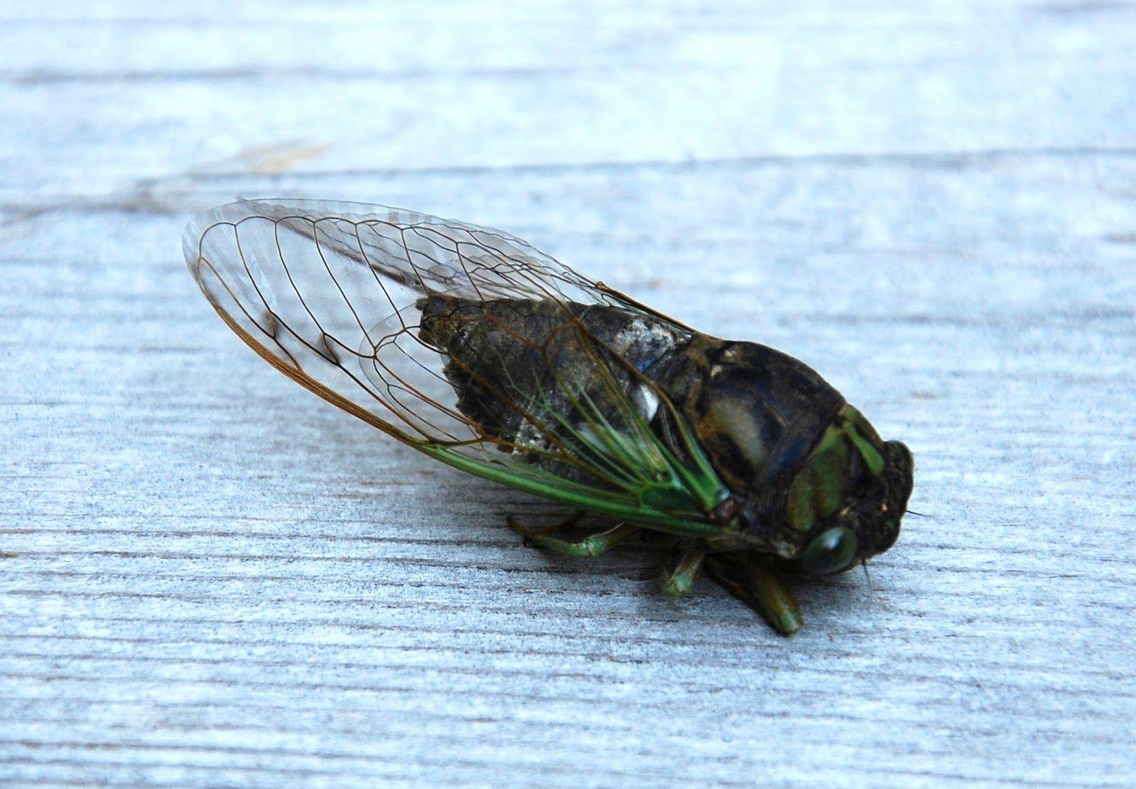Pin Von Ennacraft Auf Project Cicada
