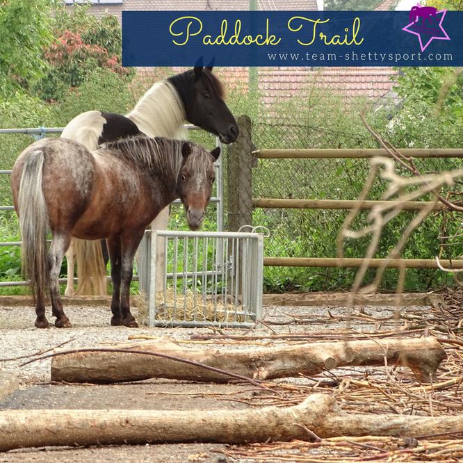 Selbstversorger Im Offenstall Mit Paddock Trail Paddock Trail Pferde Und Hunde Pferdehaltung