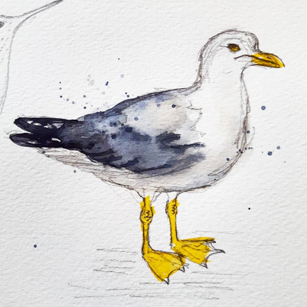 Finished the grumpy 'gull  #herringgull #watercolour #watercolor #illustration #seagull #watercolourillustration #ukillustrator #wildlifeillustration #ukbirds