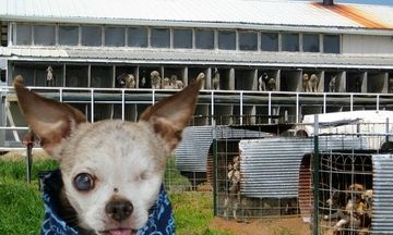 Puppy Mills We Created Them We Can End Them Puppy Mills