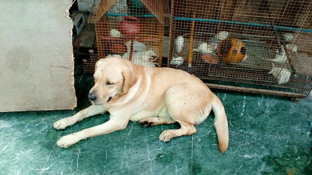 Delhi Decoded On Twitter Dog Adoption Homeless Dogs Dogs