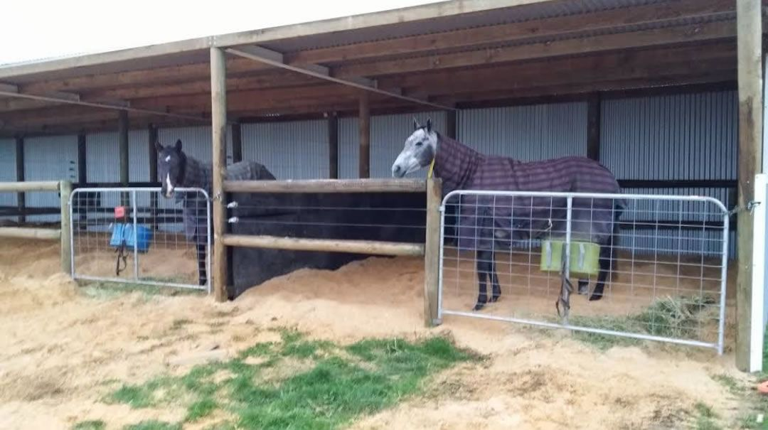 Covered Horse Shelters : Covered yards horses google search equestrian