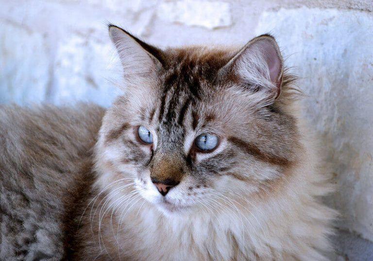 Male Cat Names 500 Brilliant Boy Kitten Name Ideas