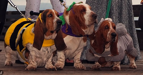 Bassets in costumes make the world a better place.