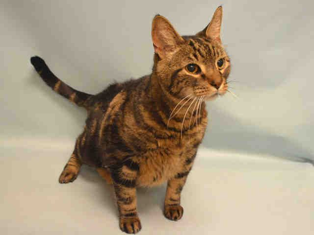 KITTIE A1074637 Manhattan Please Share **TO BE