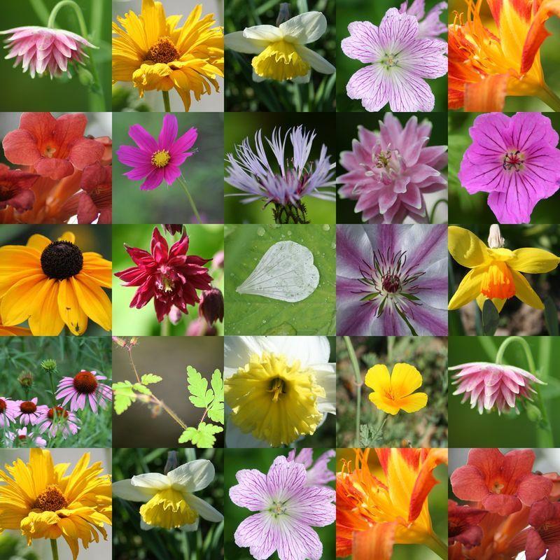 fleurs des champs un bouquet de fleurs des champs pour dire bonne f te maman l boutons. Black Bedroom Furniture Sets. Home Design Ideas