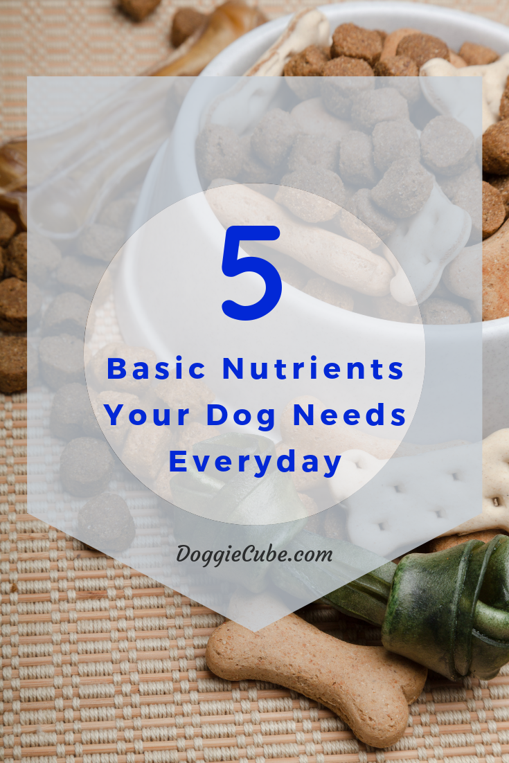 5 Basic Nutrients Your Dog Needs Everyday Dog nutrition