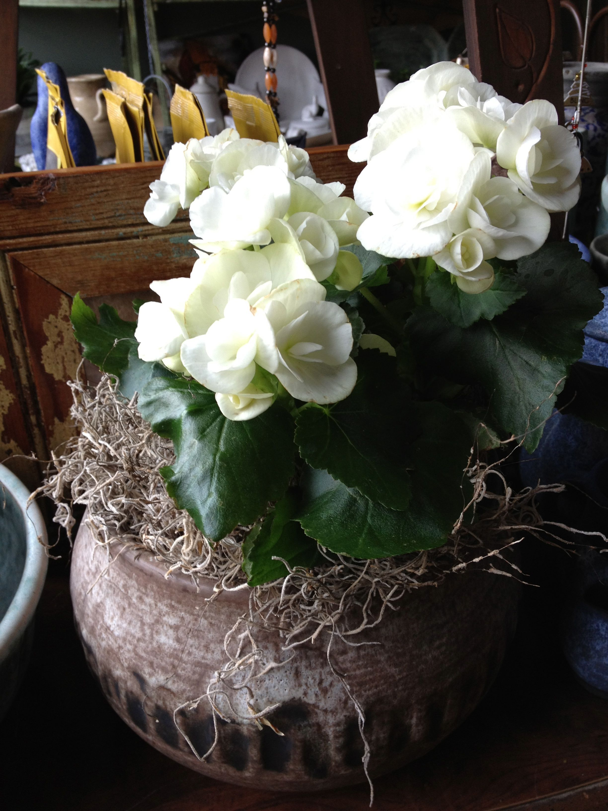 Pin By Blooms Hattiesburg On Blooms At Blooms Flower Pots Flowers Making Plant Pots