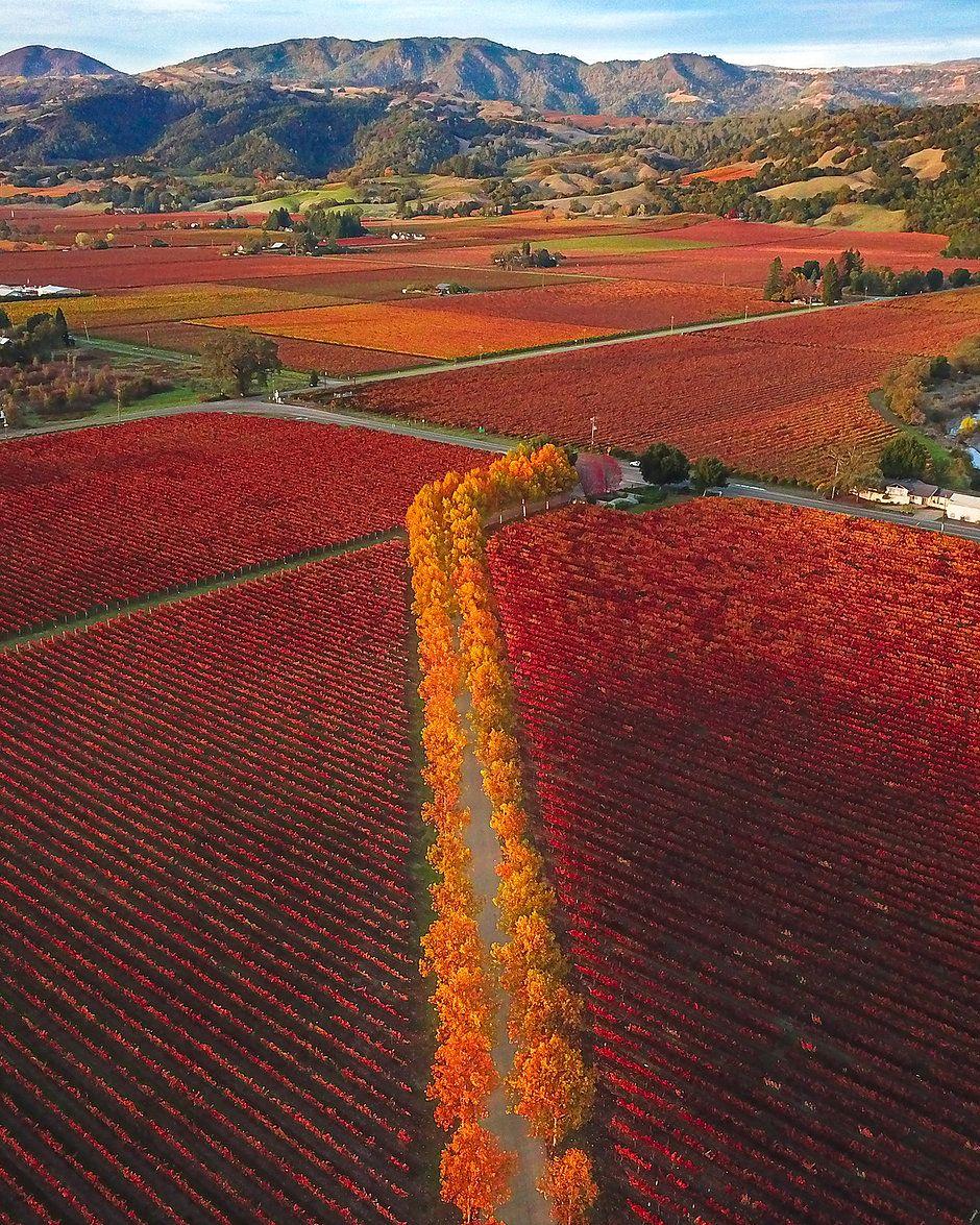 Single Post Wine Tour Sonoma Best Places To Live