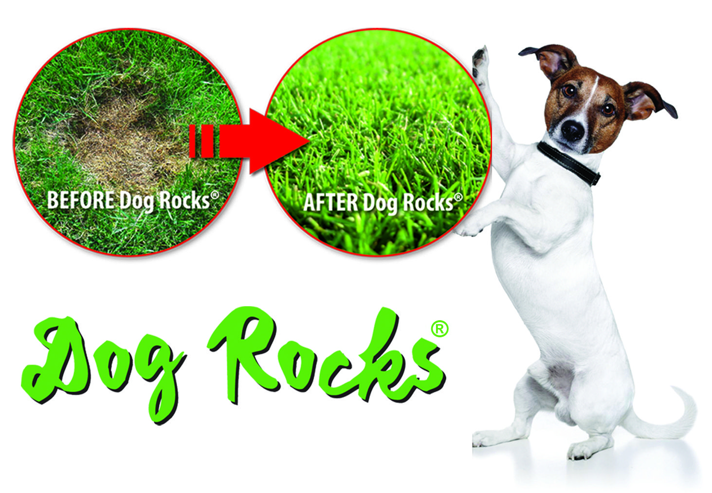 Dog Rocks Are The Natural Solution To Dog Urine Burns Marks Dog Rocks Dog Urine Dogs
