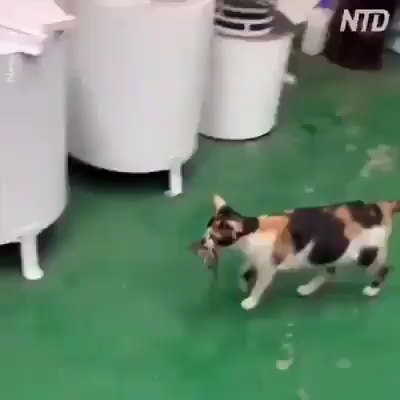 This cat actually makes sure his friend gets something to eat. Wow. Amazing.