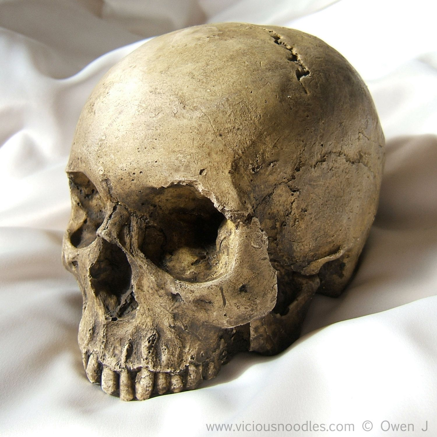 HUMAN SKULL REPLICA full size realistic replica by viciousnoodles ...