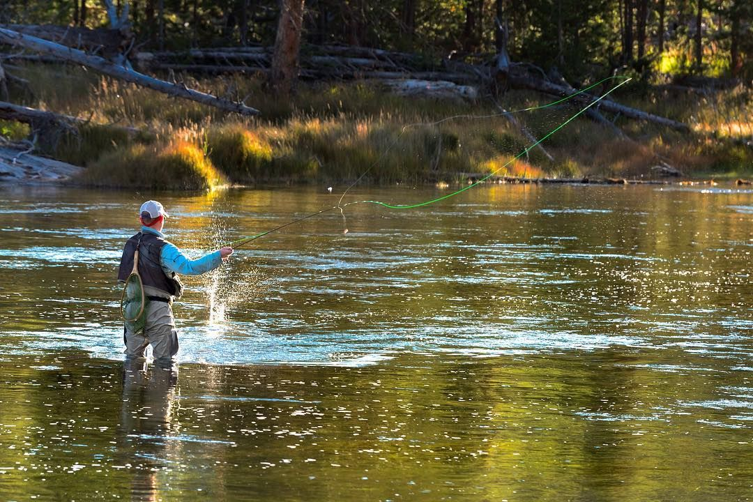 Fly Fishing The Madison River In Yellowstone Park In The Late Afternoon Light Flyfishing Madisonriver Yellowsto Fly Fishing Fishing Trip Fishing Photography