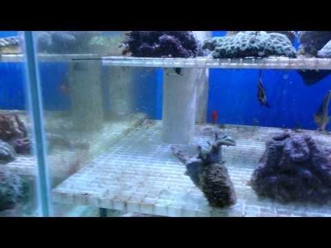 Mixed holding tanks of marine fish
