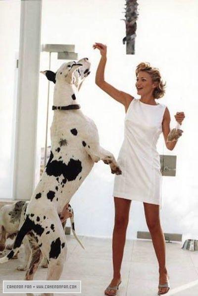 Great Dane Dog Breed Information Great Dane Dane Dog Great