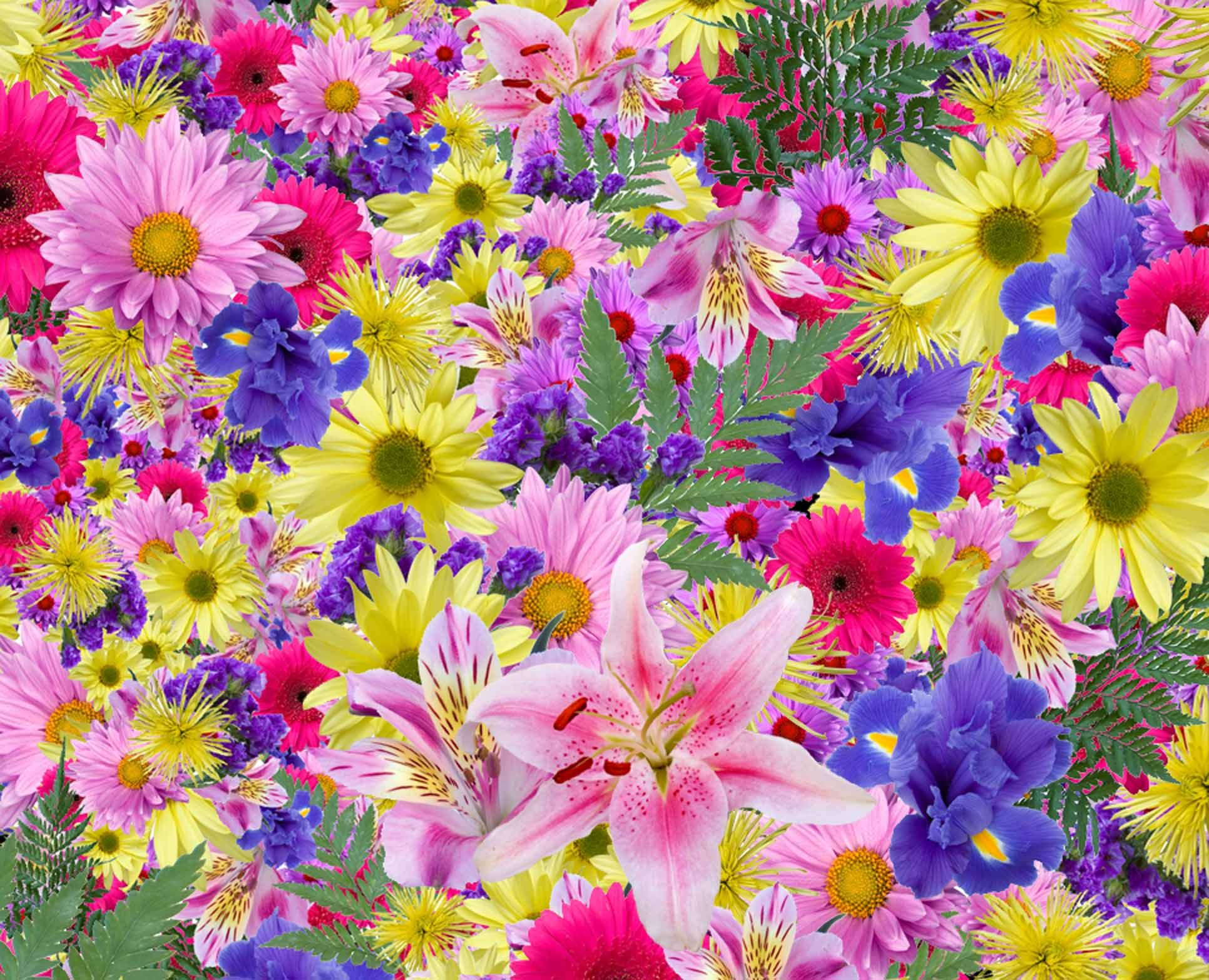Exotic Flowers Wallpapers Wallpaper