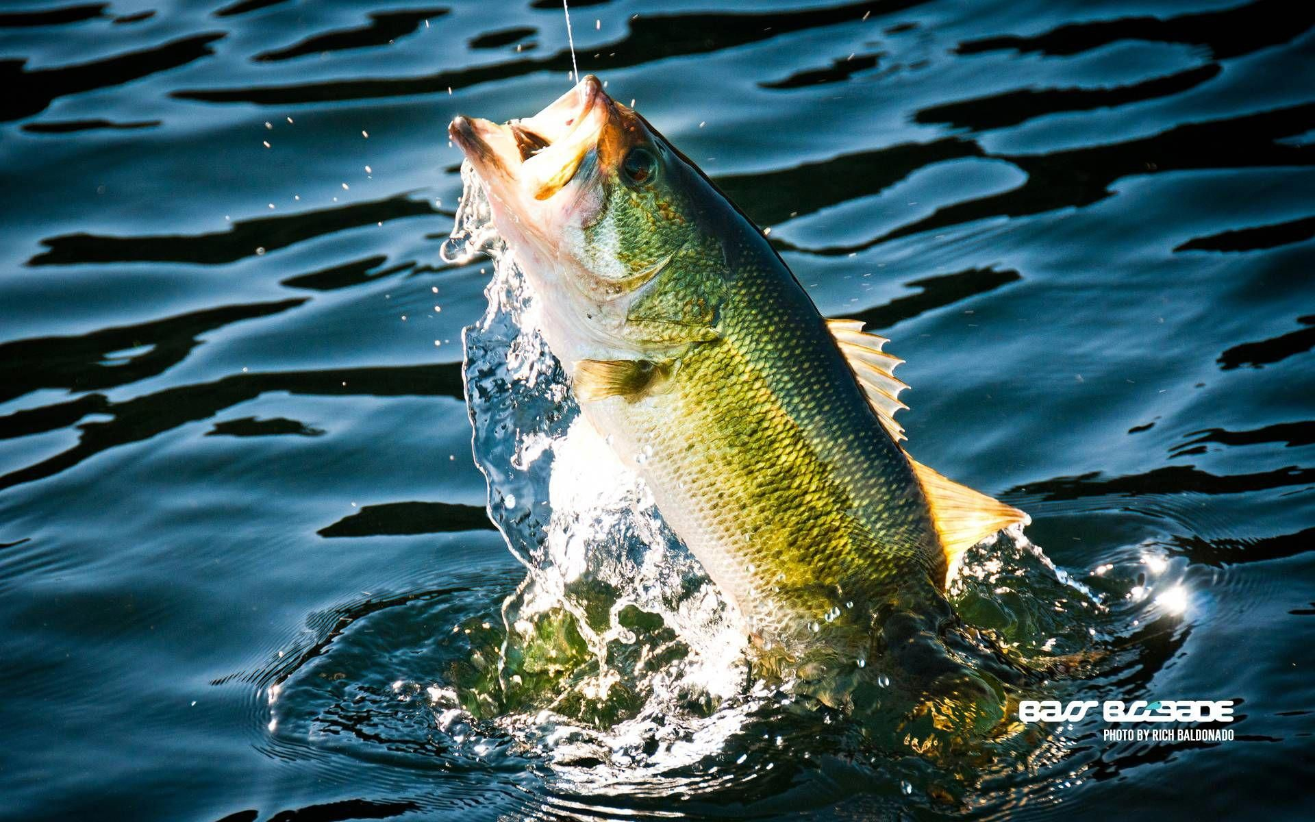 Bass Fishing Wallpaper Backgrounds Wallpaper Cave With Images Fish Wallpaper Koi Fish Fish